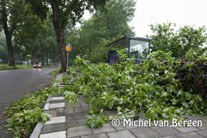 Foto Wegen Haarlem moeten takkenvrij worden gemaakt na hevig noodweer