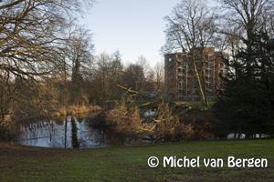 Foto Boom valt in vijver voor stadhuis Bloemendaal