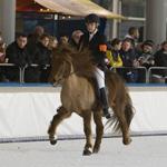 Horses on Ice druk bezocht