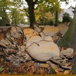 Herfst doet zijn intrede