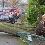 Veel overlast door storm in Haarlem