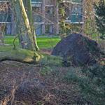 Boom valt in vijver voor stadhuis Bloemendaal