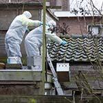 Ruim 150 duiven uit woning aan de Bilderdijkstraat in Haarlem gehaald
