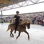 Paarden nemen bezit van Haarlemse ijsbaan: Horses on Ice 2013