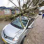 Boom valt door harde lentewind op geparkeerde auto's