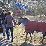 Vrouw springt de sloot in om te water geraakt paard te redden
