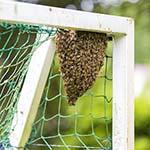 Bijen hebben 1-0 gescoord in voetbalgoal in Santpoort-Noord
