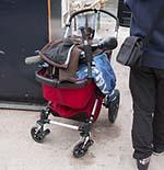 Omstander redt baby die met kinderwagen te water is geraakt